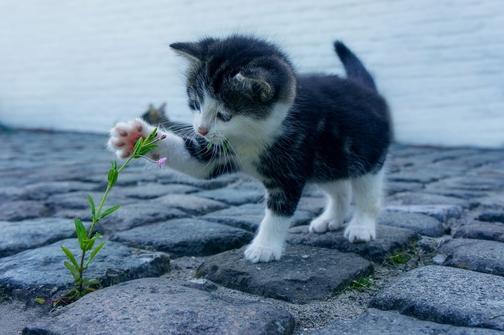 La rinotracheite: letale per i cuccioli di gatto