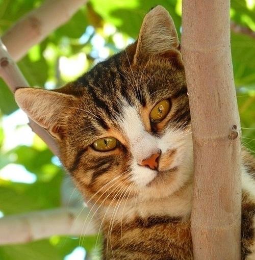 gatto ecografia