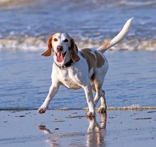cane nell'acqua che gioca felice