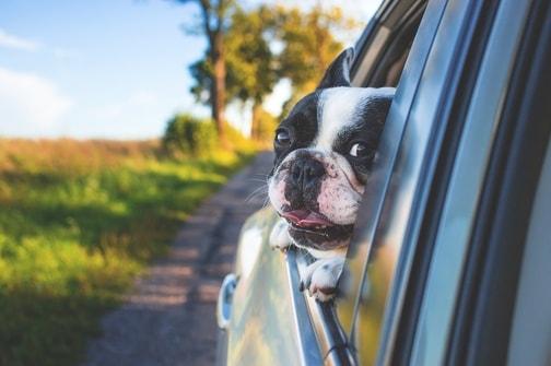 Portare il mio cane o gatto in vacanza all'estero: cosa fare