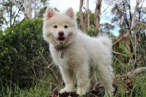 Cosa fare quando prendi un cucciolo di cane