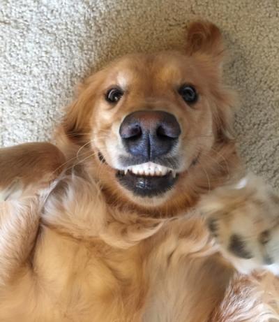 cane sorridente
