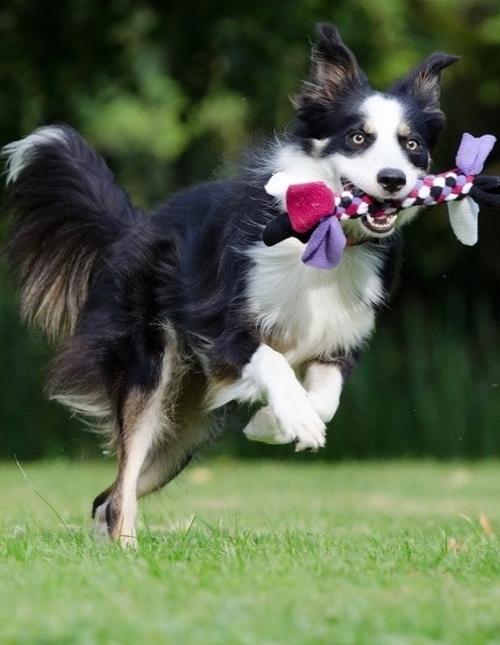 https://www.animalcare.ud.it/wp-content/uploads/2019/04/Webp.net-resizeimage-11-copy-500x645.jpg