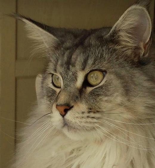 Alimentazione del gatto: consigli e regole da seguire