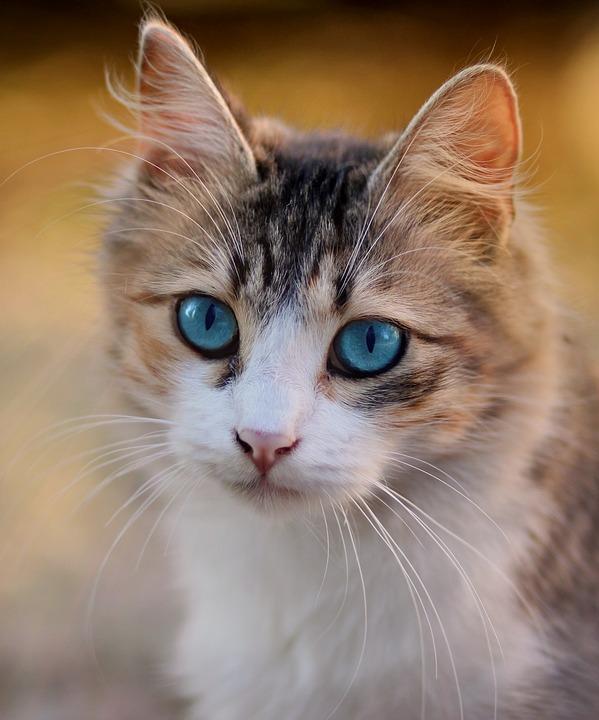Il mio gatto/cane urina fuori dalla cassetta: cosa posso fare?