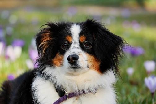 cane per jasmine