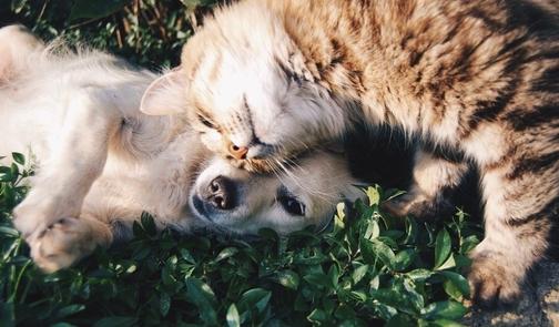 cane e gatto che si coccolano