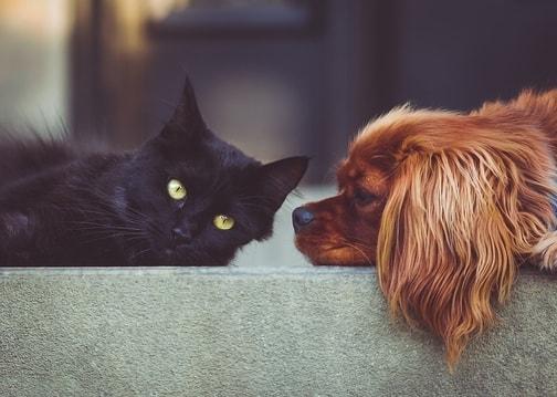 cane e gatto stressati