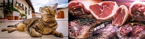 insaccati gatto
