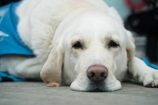 Anestesia per cani e gatti: cosa serve sapere