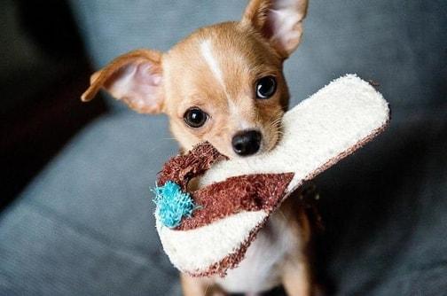 Aggressività possessiva nei cani: cos'è e come prevenirla