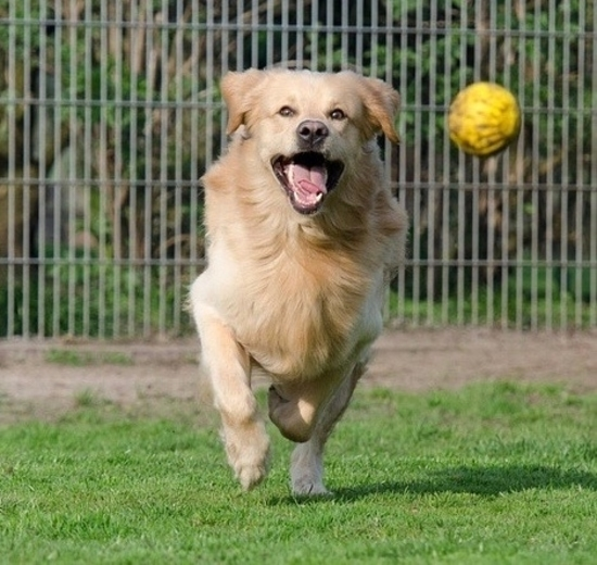 https://www.animalcare.ud.it/wp-content/uploads/2019/07/Webp.net-resizeimage-11-2-550x520.jpg