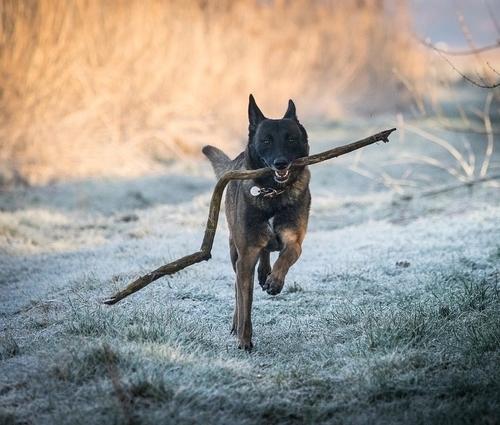 https://www.animalcare.ud.it/wp-content/uploads/2019/07/Webp.net-resizeimage-14-4-500x425.jpg