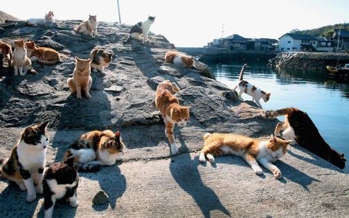 Aoshima e Tashiro-Jima: le isole dei gatti
