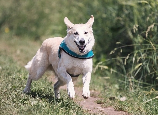 Il cimurro: malattia molto pericolosa per i cani