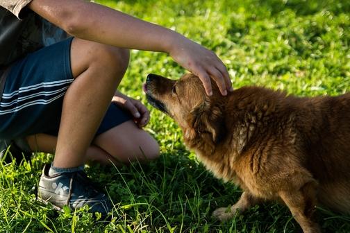 cane che si fa accarezzare