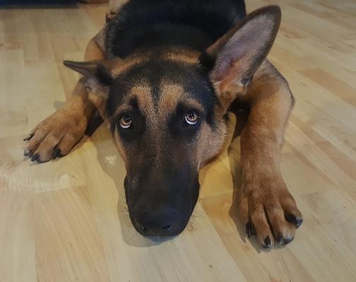 Paura dei fuochi d'artificio o dei temporali: come aiutare il tuo cane a superarla?