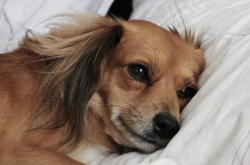Vomito e rigurgito nel cane o gatto: a cosa stare attenti quando capita