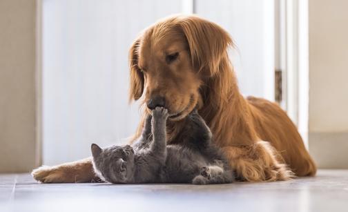 Insufficienza renale nel gatto: come prevenire