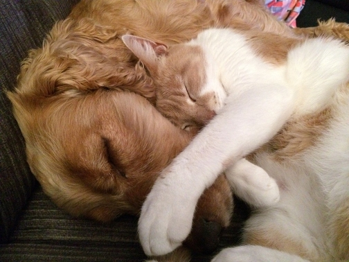 cat and dog hugging each other