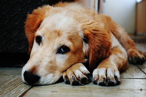 Come si sviluppa l`artrosi nel cane passo passo? Come prevenirla/rallentarla?