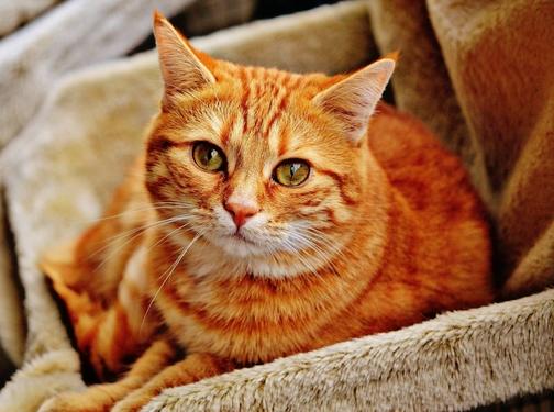 10 consigli per rendere la visita del tuo gatto dal veterinario più piacevole
