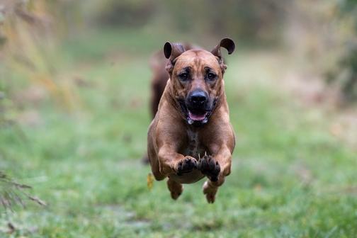 Cellule staminali nel cane: quali sono le possibilità di trattamento?